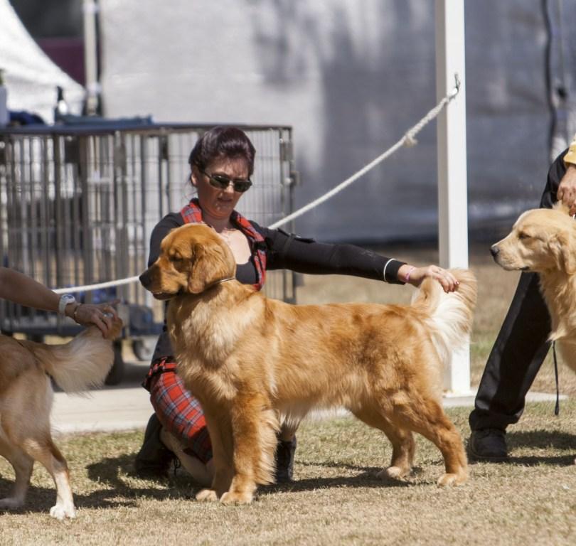 Inala Dog Show